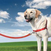 Szelki EasyWalk dla większych psów - mocna obroża, marki Premier - Easy Walk do zakupu w EasyPet : innowacje dla psa i kota
